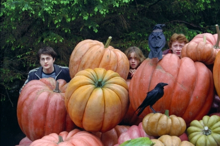 That's a rather unfortunate hair colour for someone hiding behind a massive pumpkin...